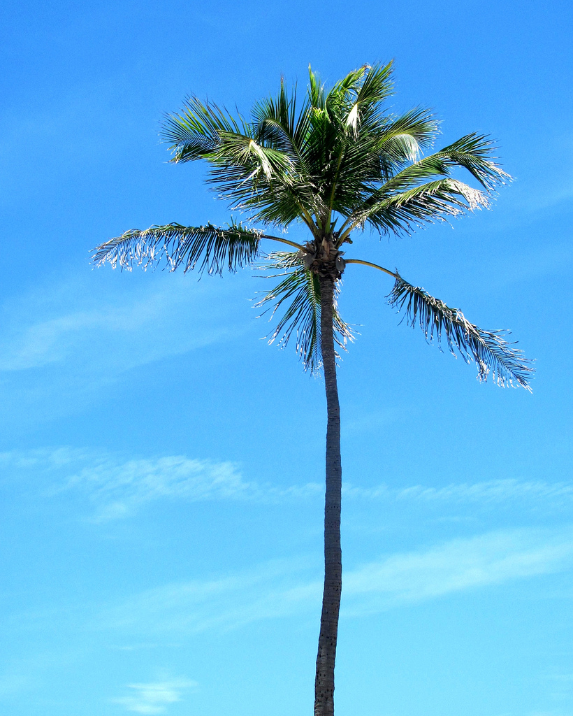 Palm Tree, Blankstareblink