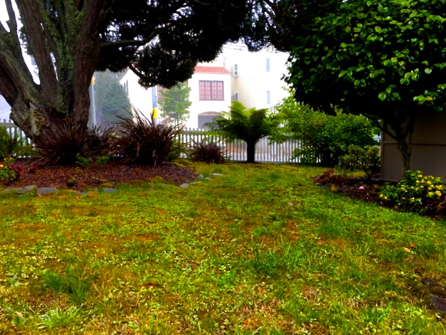 lawn goldengateheights sf 2